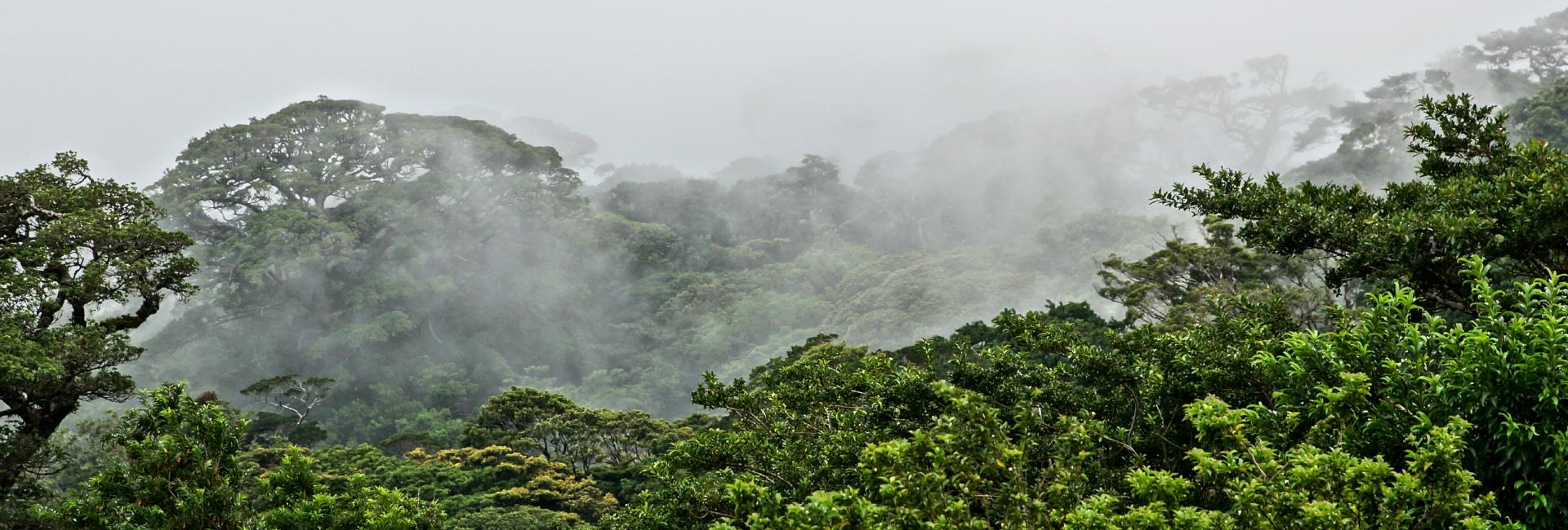 Cloudforest in Costa Rica